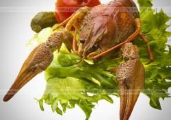 Capicola z homara