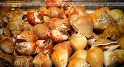 Ślimaki po napoleońsku