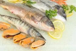 Ryby – porady praktyczne